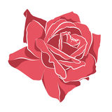 Beautiful hand drawn stencil rose, isolated on white background. Botanical silhouette of flower Royalty Free Stock Photo