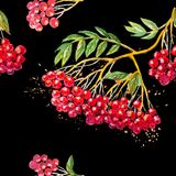 Vector seamless background with rowanberry branch Royalty Free Stock Images