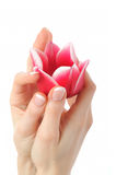 Beautiful hand with french manicure and tulip Royalty Free Stock Images