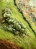 Beautiful hand-made felt texture royalty free stock photos