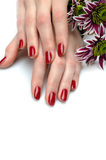 Beautiful hand with nail red manicure and flower Royalty Free Stock Images
