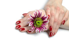 Beautiful hand with nail red manicure and flower Royalty Free Stock Photography
