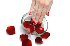 Beautiful hand with nail red manicure and petals Stock Images