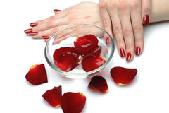 Beautiful hand with nail red manicure and petals stock photo