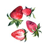 Beautiful hand painted watercolor illustration for your design. royalty free illustration