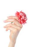 Beautiful hand, perfect french manicure, flower Royalty Free Stock Photo