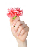 Beautiful hand, perfect french manicure, flower Stock Images