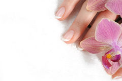 Beautiful hand with perfect nail french manicure Royalty Free Stock Images
