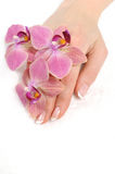 Beautiful hand with perfect nail french manicure Stock Photo