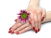 Beautiful hand with perfect nail red manicure Stock Photo