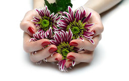 Beautiful hand with red manicure and flowers Stock Image