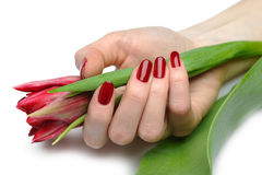 Beautiful hand with red manicure and tulip Royalty Free Stock Photos