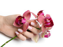 Beautiful Hand With Nail Manicure And Orchid Royalty Free Stock Photography