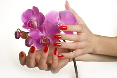 Beautiful Hand With Red Manicure And Orchid Flower Royalty Free Stock Image