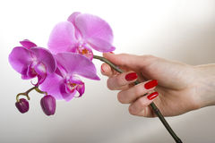 Beautiful Hand With Red Manicure And Orchid Flower Stock Images