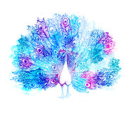 Beautiful Handdrawn Peacock bird consist many details. Royalty Free Stock Photos