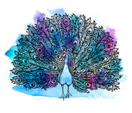 Beautiful Handdrawn Peacock bird consist many details. Stock Photography