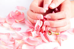 Beautiful hands holding rose petals Stock Images