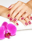 Beautiful hands with manicure Stock Photography