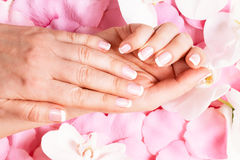 Beautiful hands with manicure stock photos