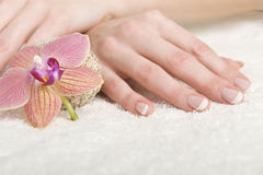 Beautiful hands with perfect french manicure Stock Photography