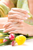 Beautiful hands with tulips Stock Image