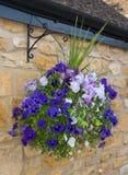 Beautiful hanging basket of blue and purple pansies Stock Image