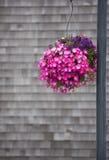 Beautiful Hanging Plant Stock Image