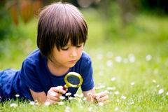 Beautiful happy child, boy, exploring nature with magnifying gla. Ss, summertime Stock Photo
