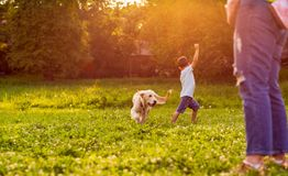 Beautiful happy family is having fun with golden retriever - Boy. Beautiful happy family is having fun with golden retriever - Happy boy playing with dog in park stock image
