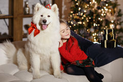 Beautiful happy girl in a red sweater hugging a big white dog in. Christmas interiors. The girl`s eyes closed Stock Photos