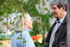 Beautiful happy old people walking in the spring park royalty free stock photography