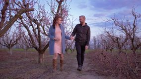 Happy pregnant woman goes hand in hand with husband father of unborn child in flowering orchard in pruning season. Beautiful happy pregnant woman goes hand in stock footage