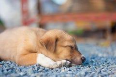Beautiful happy puppy sleep. On street Stock Image