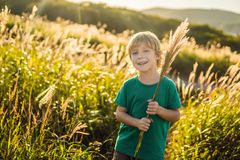 Beautiful happy smiling little boy among the cornfields touching plants with his hands.  stock image