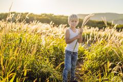 Beautiful happy smiling little boy among the cornfields touching plants with his hands.  royalty free stock photos