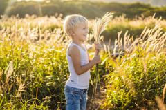 Beautiful happy smiling little boy among the cornfields touching plants with his hands.  stock images