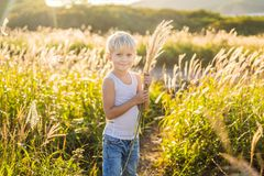 Beautiful happy smiling little boy among the cornfields touching plants with his hands.  royalty free stock image