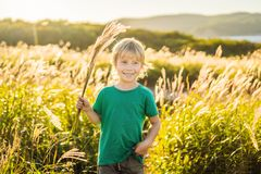 Beautiful happy smiling little boy among the cornfields touching plants with his hands.  royalty free stock photo