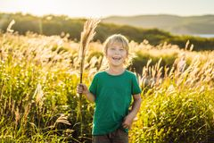 Beautiful happy smiling little boy among the cornfields touching plants with his hands.  stock photo