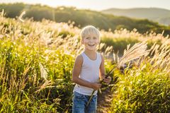 Beautiful happy smiling little boy among the cornfields touching plants with his hands.  stock photos
