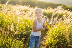 Beautiful happy smiling little boy among the cornfields touching plants with his hands.  royalty free stock images