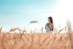 Beautiful happy woman in a field, sunny afternoon, white dress. Beautiful hair, tanned skin, concept of enjoying nature. Beautiful happy woman in a field, sunny royalty free stock photography