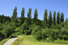 Beautiful hardwood trees in suburbs of Prague Royalty Free Stock Image