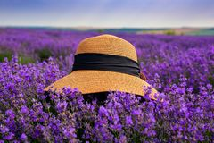 Beautiful hat on a lavender field on a sunny day stock photo