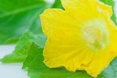Beautiful Hatch flower Stock Photo