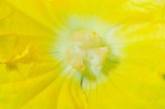 Beautiful Hatch flower Stock Photos