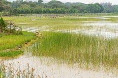 Beautiful Hawassa lake royalty free stock photography