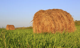 Beautiful haystacks on green lawn Royalty Free Stock Photos