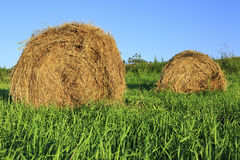 Beautiful haystacks on green lawn Stock Photos